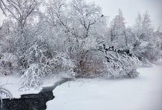 小冬天小河在雪下的被雪包围住的树下在冬天 免版税库存照片