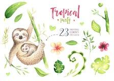 小动物怠惰托儿所绘画 水彩boho热带图画,儿童热带例证 逗人喜爱的棕榈 向量例证