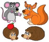 小动物的收藏 免版税库存照片