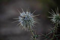 小危险植物 库存图片