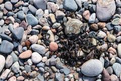 小卵石、石头、岩石和海草在海滩 免版税库存图片