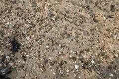 小卵石和壳 库存照片