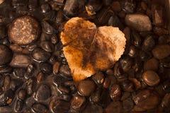 小卵石和水为琥珀色的秋天叶子提供一个背景 免版税图库摄影