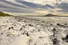 小卵石海岛在福克兰群岛 图库摄影