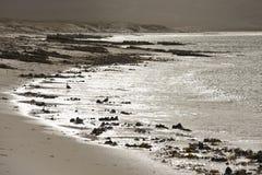 小卵石海岛-福克兰群岛 库存图片