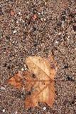 小卵石海滩 抽象背景复制空间 库存图片