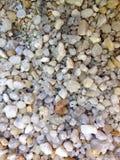小卵石石渣地板 库存图片