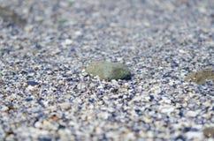 小卵石细节在海滩的 图库摄影