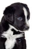 小可爱的狗 图库摄影