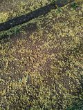 小叶子,粉碎从树,报道沥青的表面在街道上的 免版税库存照片
