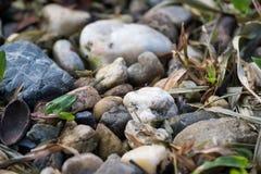 小各种各样的岩石和草在地面上 库存图片
