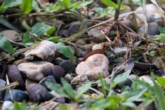 小各种各样的岩石和草的特写镜头图象 免版税库存照片