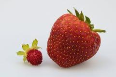 小和大草莓 免版税库存照片