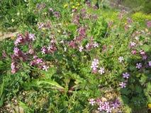 小和柔和的紫色桃红色花 库存照片