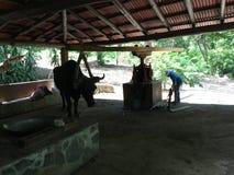 小哥斯达黎加的农场 免版税库存图片