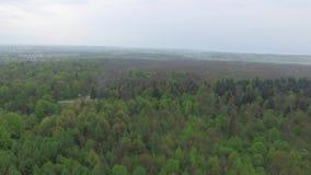 小国家城市鸟瞰图和周围的森林环境美化 股票录像