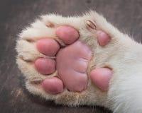 小在木桌上的狮子爪子 库存图片