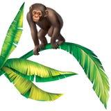小在棕榈树叶子的猴子大猩猩 库存图片