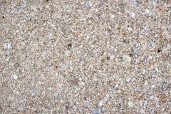 小块壳和沙子纹理 免版税库存图片
