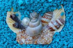 小壳和一颗珍珠在蓝色小石头 库存照片