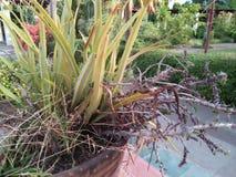 小多刺的植物看起来干燥 库存照片