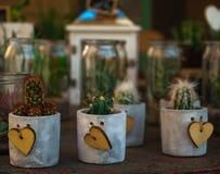 小多汁植物和仙人掌在另外具体罐和瓶子w 图库摄影