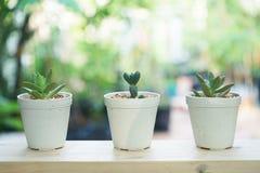 小多汁盆栽植物装饰在与早晨温暖的光的木窗口 免版税库存图片