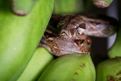 小大蟒蛇 库存图片