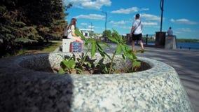 小大麻植物在花床上在城市公园 股票录像