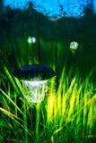 小太阳庭院光,灯笼在花床上 免版税库存照片