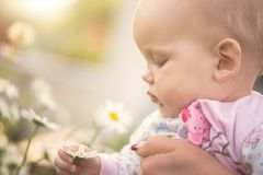 小女婴在她的手上的拿着一朵雏菊 库存照片