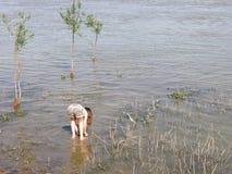 小女孩到水里 库存照片