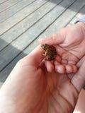 小女孩和她的母亲在手上的拿着一只青蛙 图库摄影
