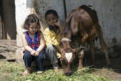 小女孩和男孩哺养的小牛与草 免版税图库摄影