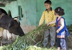 小女孩和男孩哺养的母牛与草 库存照片