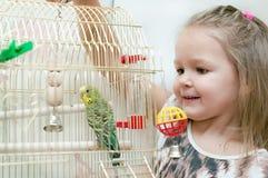 小女孩和budgie 免版税图库摄影