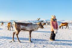 小女孩哺养的驯鹿 图库摄影
