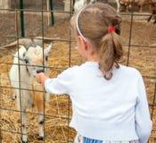 小女孩哺养的山羊 免版税库存图片