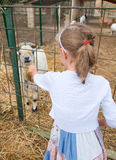 小女孩哺养的山羊 免版税库存照片