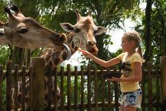 小女孩哺养的长颈鹿 获得愉快的孩子与动物的乐趣 免版税库存图片