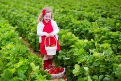 小女孩在农田的采摘草莓 免版税库存图片