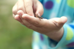 小女孩在她的手上的拿着一只蚂蚱 求知欲和友谊概念 库存照片