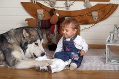 小女孩在房子和爱斯基摩狗里 库存图片