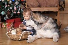 小女孩在房子和爱斯基摩狗里 免版税库存照片