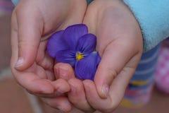 小女孩在手上的拿着紫色花 免版税库存照片