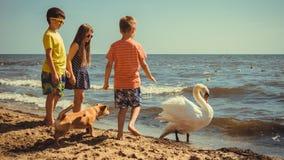 小女孩在海滩的男孩孩子获得与天鹅的乐趣 免版税库存照片