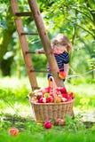 小女孩在苹果庭院里 库存图片