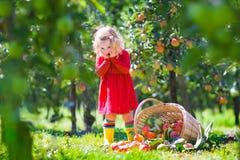 小女孩在苹果庭院里 库存照片