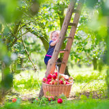 小女孩在苹果庭院里 免版税库存照片