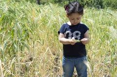 小女孩在麦子农场 免版税库存照片
